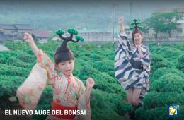 El nuevo auge del Bonsai