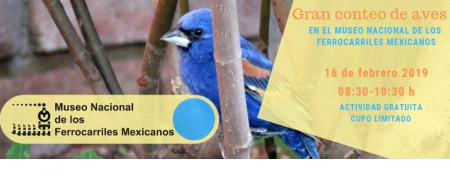 Gran conteo de aves en el jardín