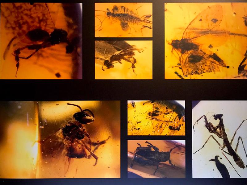 Origen y evolución de los insectos