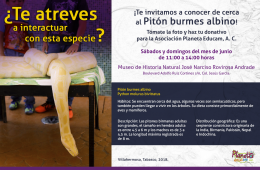 Exhibition of the Albino Burmese Python