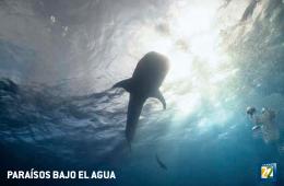 Paraísos bajo el agua