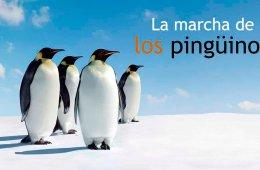 La marcha de los pingüinos (Francia, 2005)