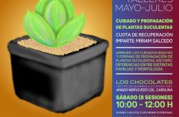 Cuidado y propagación de plantas suculentas