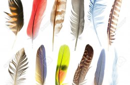Amazing Feathers and Birds