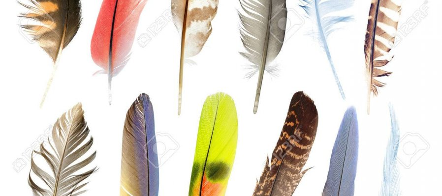 Plumas y Aves Asombrosas