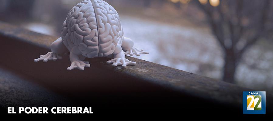 El poder cerebral