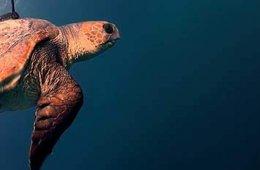 La tortuga primordial