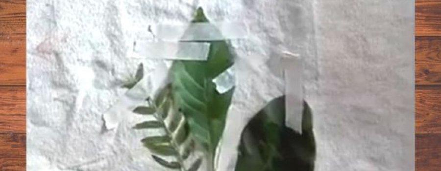 Taller de impresión botánica sobre tela y papel