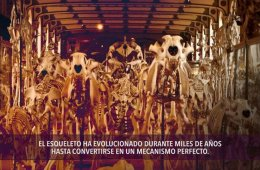 Secretos de los huesos