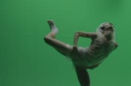 Muestras de Solistas de Danza Contemporánea: Jóvenes Ar...