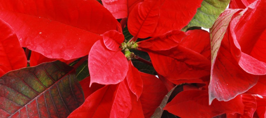Una flor llena de color y tradición