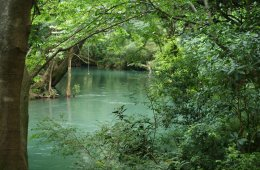 Biodiversidad de Tamaulipas