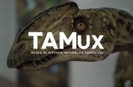 Recorrido por el Museo de Historia Natural de Tamaulipas