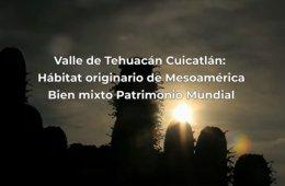 Valle de Tehuacán Cuicatlán, hábitat originario de Mes...