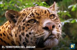 El territorio del jaguar
