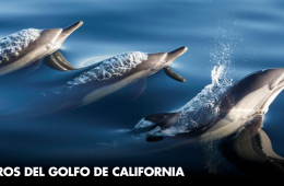 Tesoros del Golfo de California