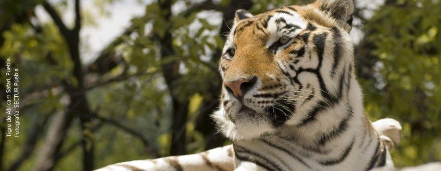Vida e historia, Africam Safari. Puebla