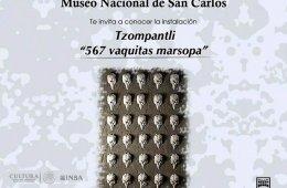 Tzompantli 567 vaquitas marsopa