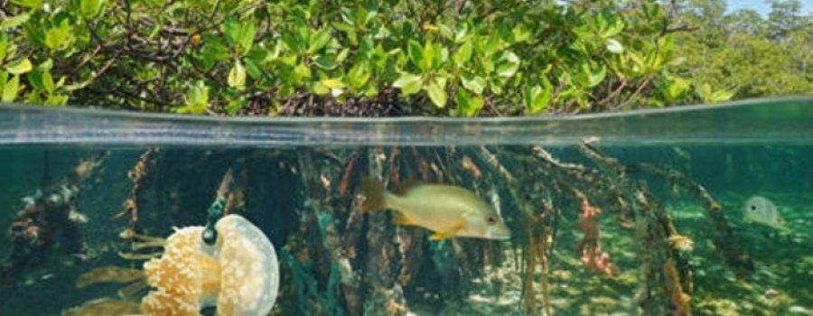 Día internacional de conservación del ecosistema de manglares