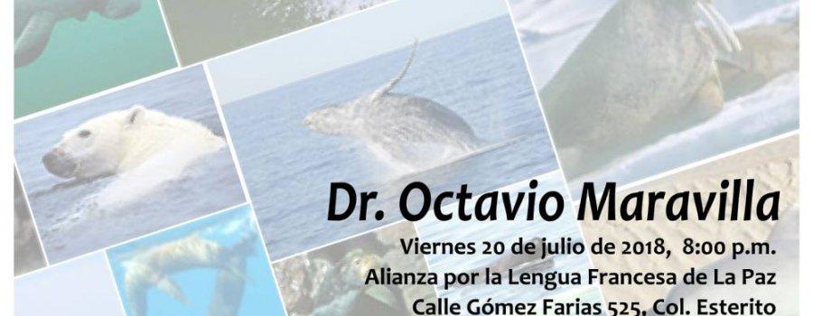 Biodiversidad en mamíferos marinos
