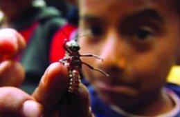 Videocarta de Chicahuaxtla