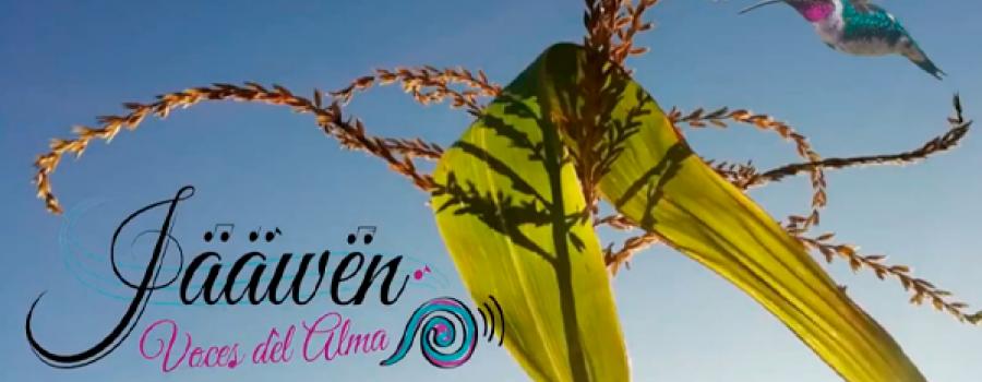 Ita chanuni. Flor de maíz en mixteco