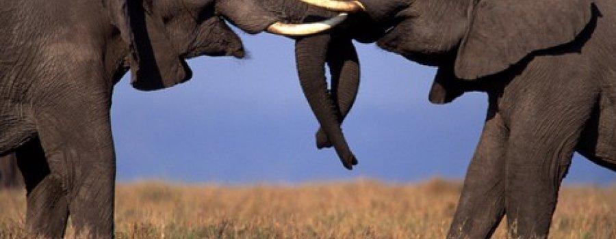 Volando sobre África