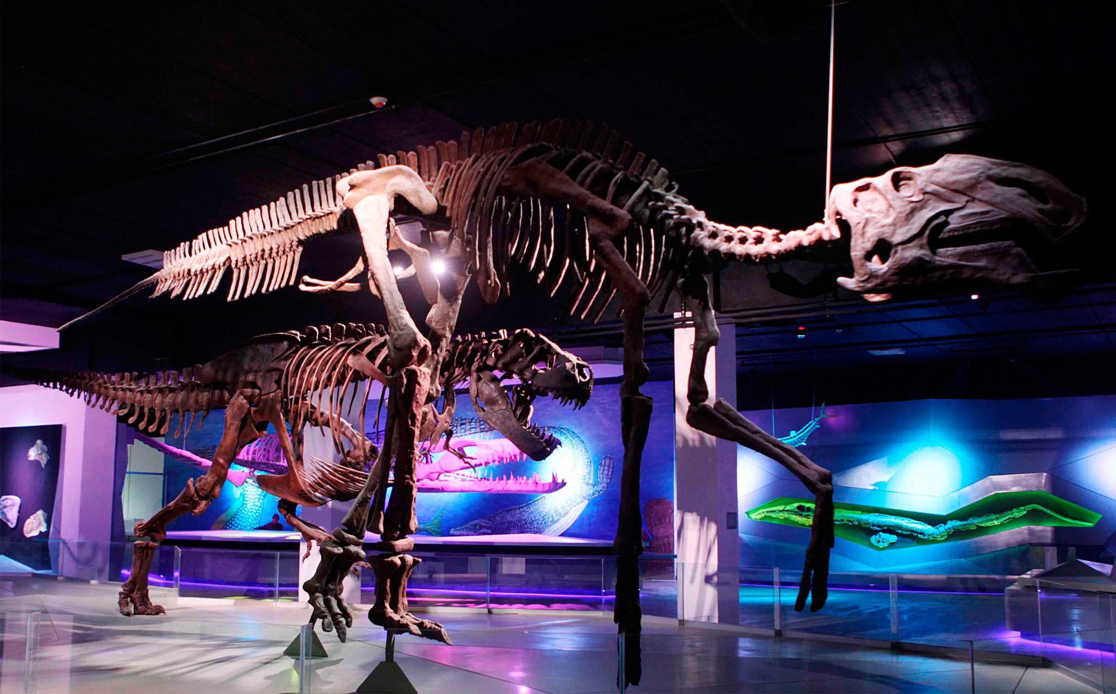 esqueleto de dinosaurio en Tehuacán