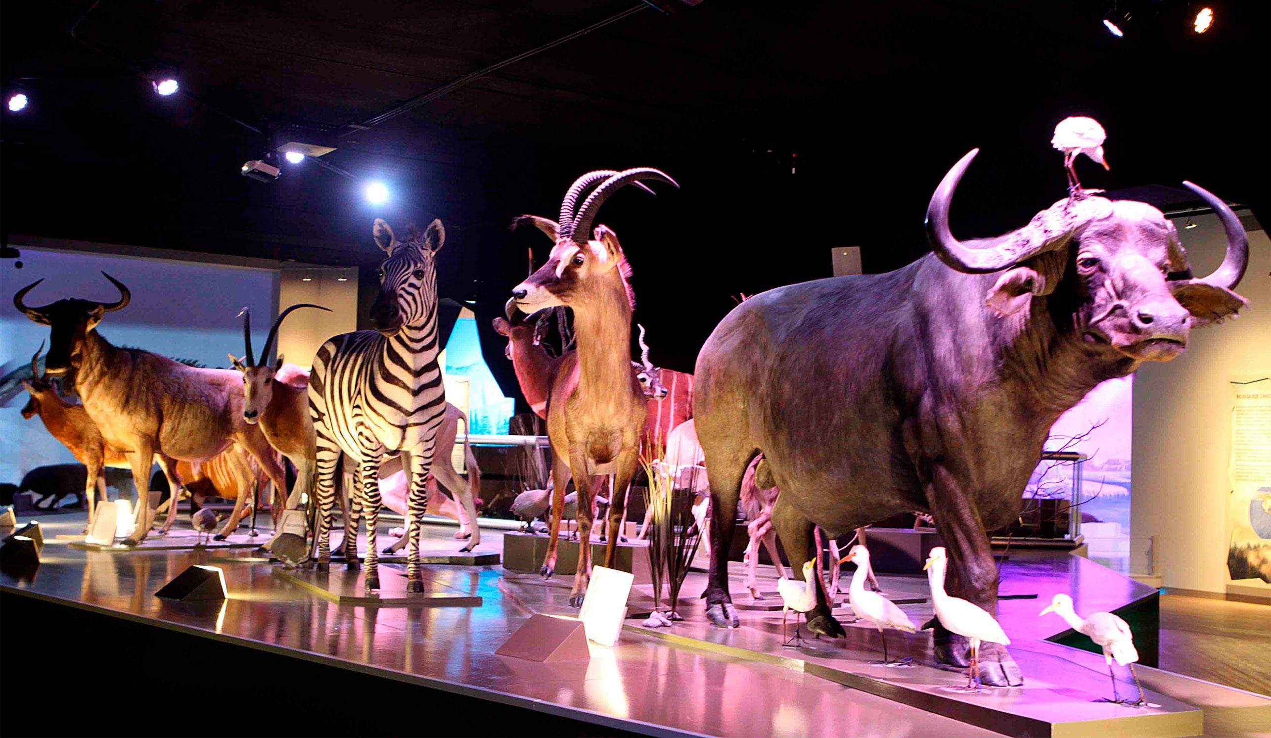Museo de la Evolución Puebla