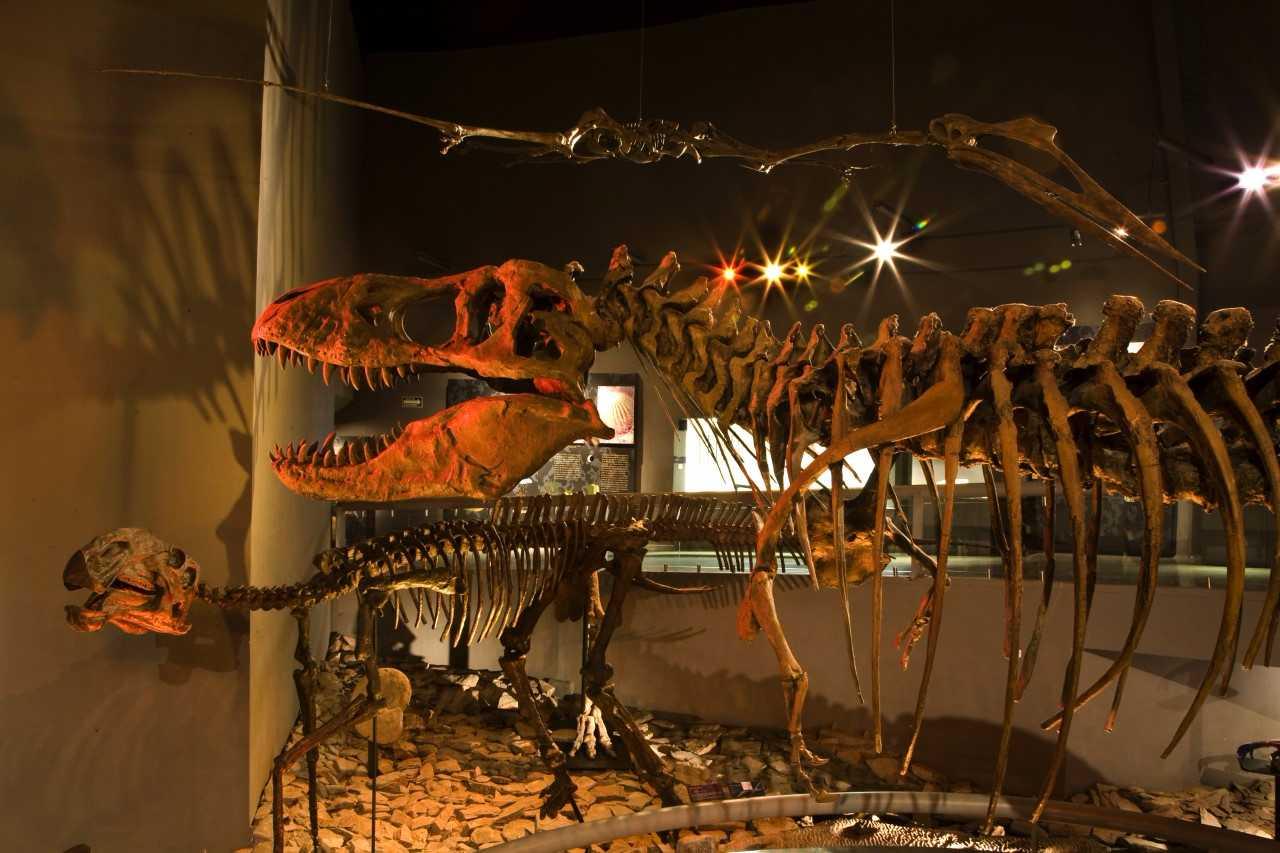 Museo del Desierto tiene una de las grandes muestras del pasado prehistórico.